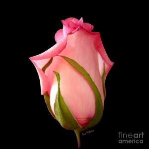 pretty-in-pink-rosebud-sue-melvin